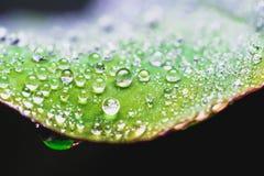 在叶子的小滴早晨 图库摄影
