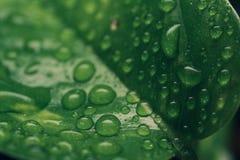 在叶子的小滴早晨 库存图片