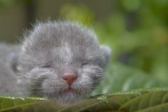 在叶子的小猫 免版税库存照片