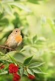 在叶子的小的鸟 库存图片
