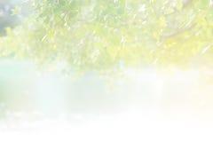 在叶子的抽象淡色柔光早晨阳光在湖 图库摄影