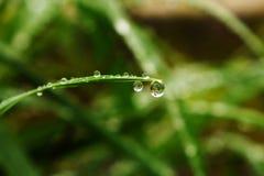 在叶子的早晨露水 免版税库存图片