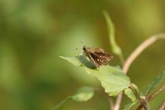 在叶子的昆虫和搜寻在自然世界的食物 库存图片
