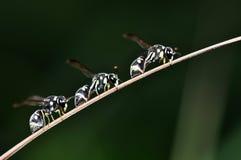 在叶子的昆虫宏指令 免版税库存图片