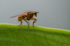 在叶子的昆虫-宏观摄影 库存照片