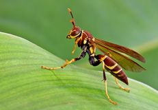 在叶子的昆虫 图库摄影