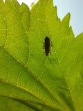 在叶子的昆虫 库存图片