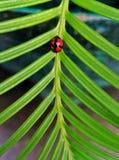 在叶子的昆虫 免版税图库摄影