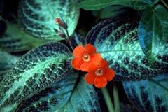 在叶子的最小的花 库存图片