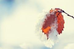 在叶子的树冰在冬天森林里 免版税库存图片