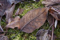 在叶子的树冰 免版税库存图片