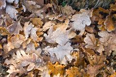 在叶子的树冰 免版税库存照片