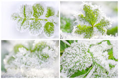 在叶子的树冰 免版税图库摄影
