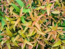 在叶子的样式在浇灌以后 库存照片
