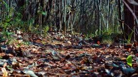在叶子的森林道路 库存图片