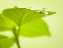 在叶子的水下落。 免版税库存照片