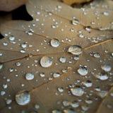 在叶子的水下落有细节结构的 免版税库存图片