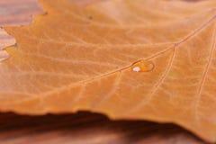 在叶子的水下落 库存照片