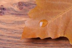 在叶子的水下落 免版税图库摄影