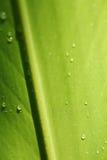 在叶子的水下落 免版税库存照片