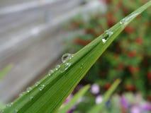 在叶子的水打翻宏指令 免版税图库摄影