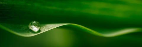 在叶子的水滴 图库摄影
