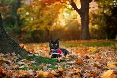 在叶子的猫 图库摄影