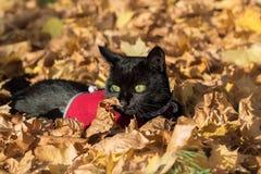 在叶子的猫 库存照片
