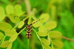 在叶子的甲虫 免版税库存图片