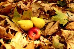 在叶子的秋天果子 免版税库存图片