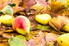 在叶子的秋天果子 图库摄影