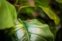 在叶子的结婚戒指 在玉簪属植物叶子的结婚戒指 新娘和新郎的结婚戒指在一片绿色热带叶子 免版税库存照片