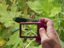 在叶子的蓝色蜻蜓秘密审议反光镜 免版税库存照片