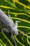 在叶子的蚂蚱 免版税库存照片