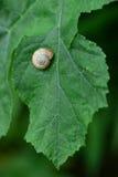 在叶子的蜗牛壳 免版税库存照片