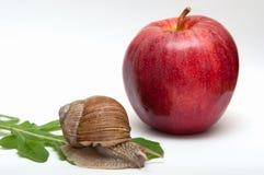 在叶子的蜗牛 苹果计算机 图库摄影