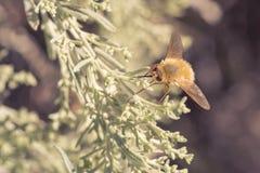 在叶子的蜜蜂飞行 免版税库存图片
