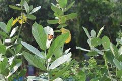 在叶子的蝴蝶 免版税图库摄影
