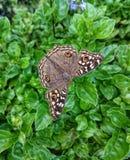 在叶子的蝴蝶 库存照片