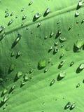 在叶子的被日光照射了雨下落 免版税库存图片