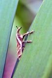 在叶子的象甲在森林地板上 免版税库存照片