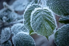 在叶子的重的霜 免版税图库摄影