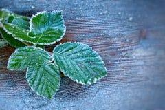 在叶子的重的霜 库存照片