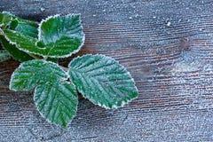 在叶子的重的霜 免版税库存图片