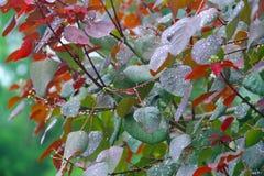 在叶子的雨下落 免版税图库摄影