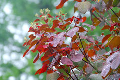 在叶子的雨下落 免版税库存照片
