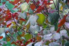 在叶子的雨下落 库存照片