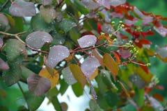 在叶子的雨下落 免版税库存图片
