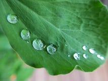 在叶子的雨珠 免版税图库摄影
