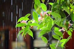 在叶子的雨 图库摄影